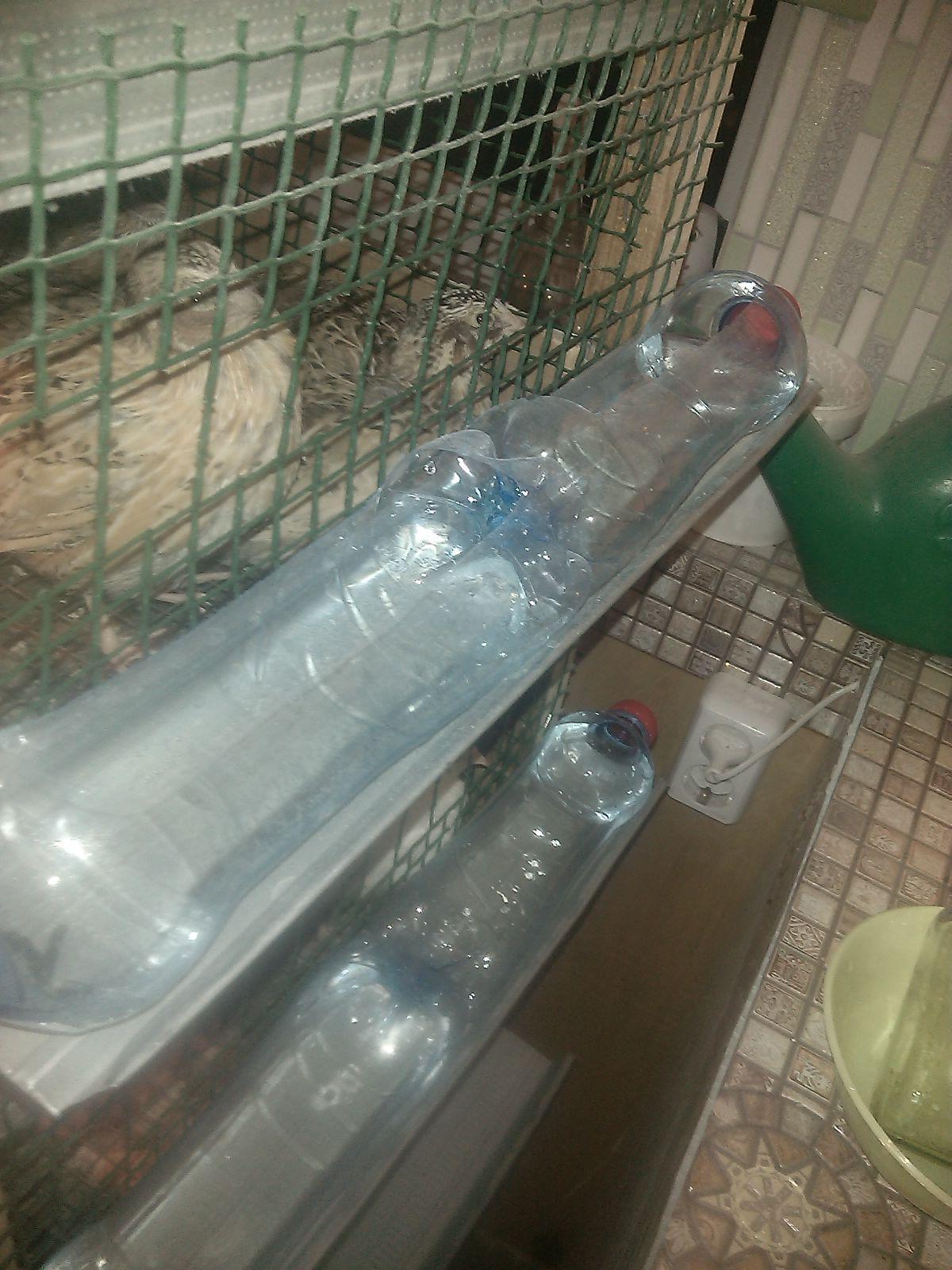 Как сделать кормушку из пластиковой бутылки для перепелов