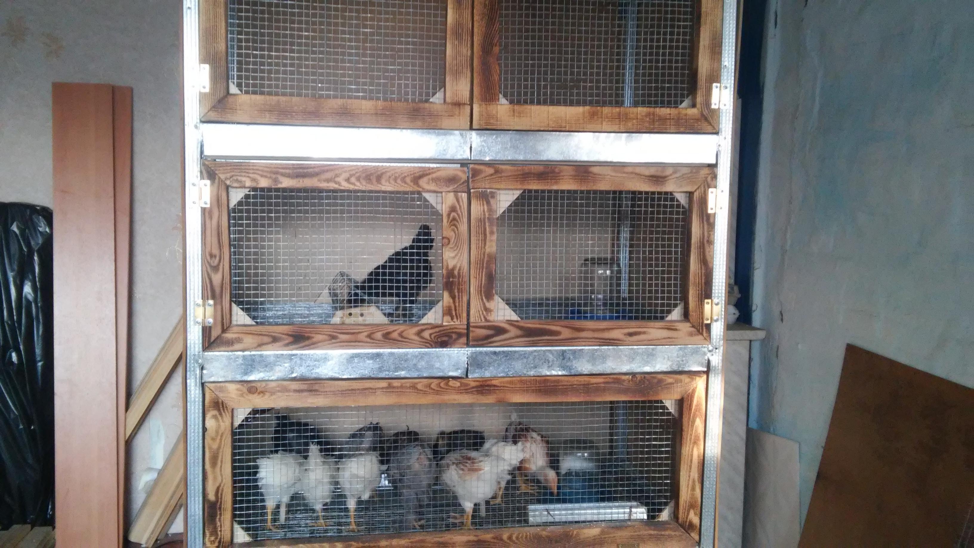 Брудер для цыплят на 60 цыплят