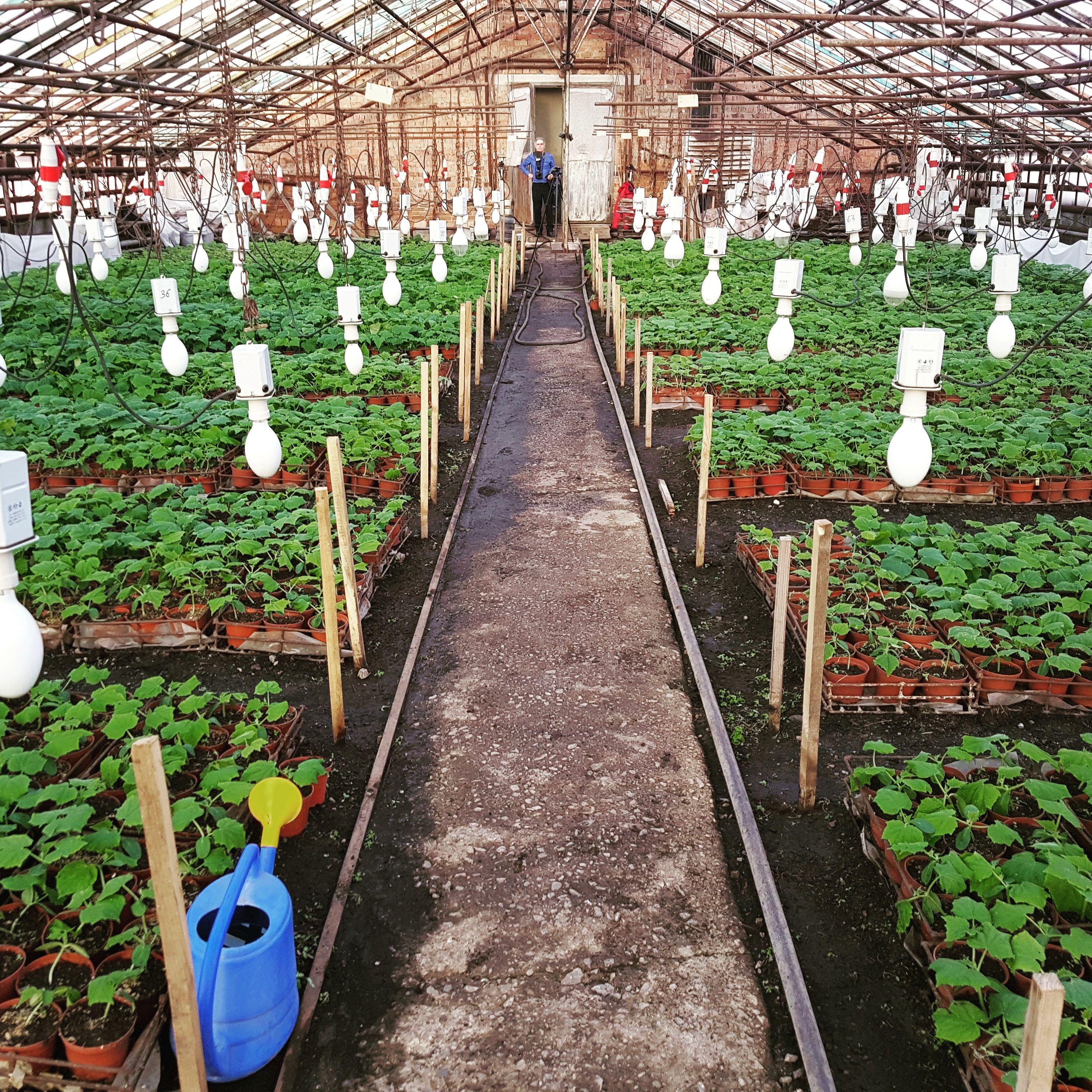 Клубника в теплице - 4 лучших способа выращивания с 11