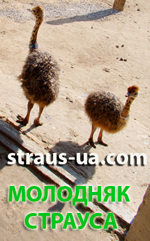 Украинский страус- продажа молодняка и племенной птицы