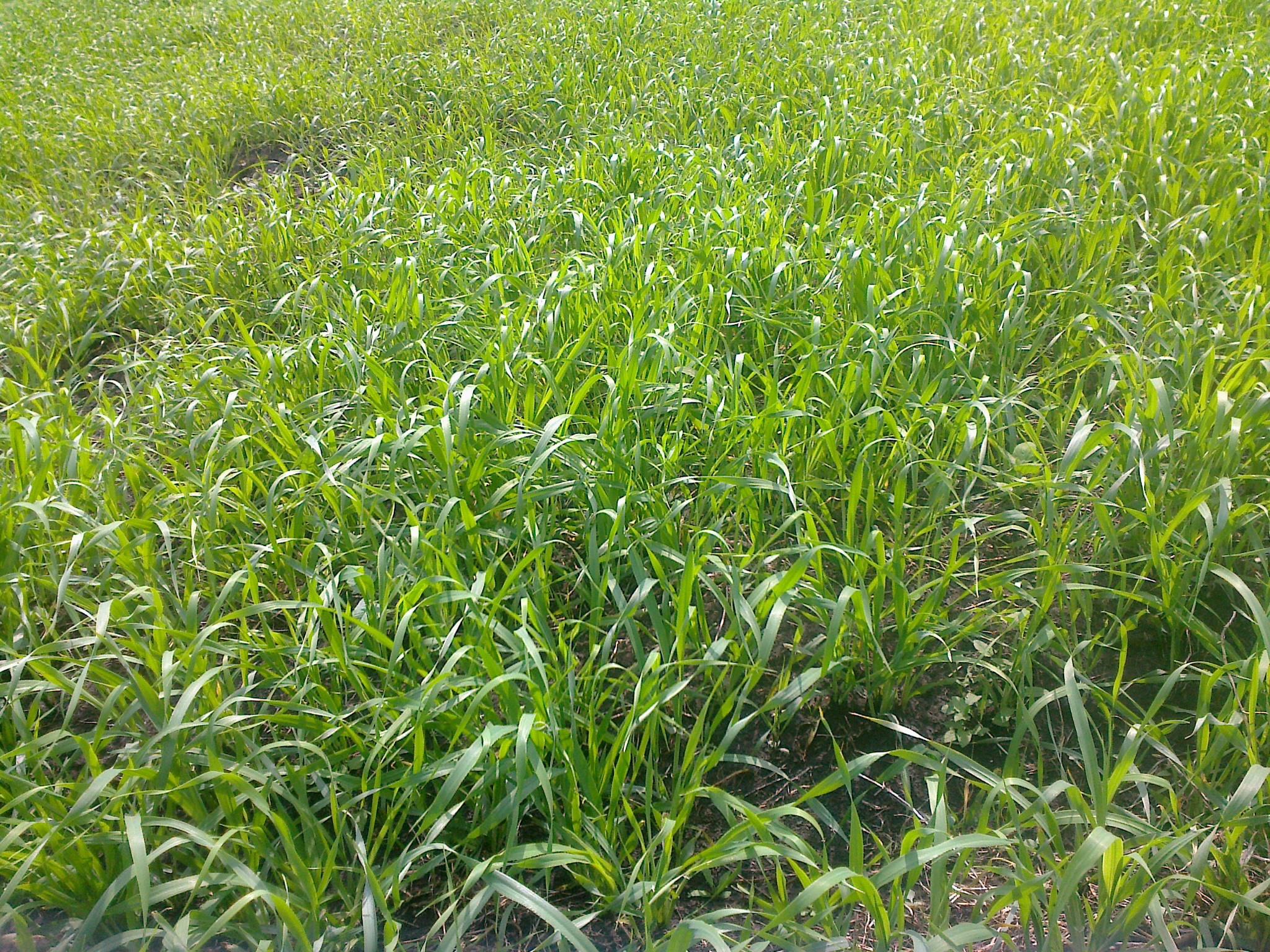 материал замечательно опасна ли трава донник для коров изготовлении термобелья